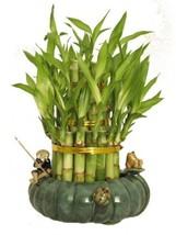 """KL Design & Import - 3 Tier 4"""" 6"""" 8"""" Top Quality Lucky Bamboo Arrangemen... - £21.77 GBP"""