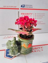 Novelty African Violet -3''with Elephant Vase /Better Growth - Best Bloo... - $190,50 MXN