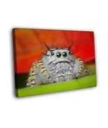 Fantastic Macro HDR Spider Tarantul Animal Arthropod 12x8 FRAMED CANVAS - $16.96