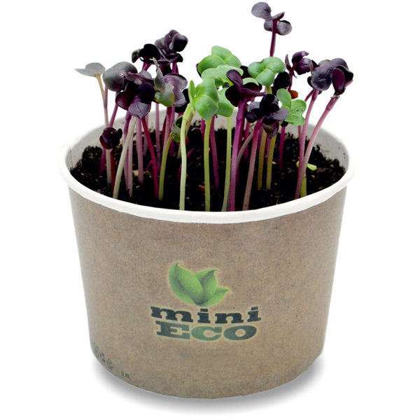 Red Radish Microgreens Grow Kit 400 Seeds Herbs Organic Bio Plant Salad Garden