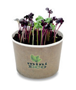 Red Radish Microgreens Grow Kit 400 Seeds Herbs Organic Bio Plant Salad ... - $13.13 CAD