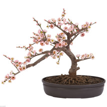 Cherry Blossom Bonsai Silk Tree FREE SHIPPING  NEARLY NATURAL - €56,54 EUR