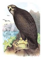 Gray, or Sea Eagle by Theodore Jasper - Art Print - $19.99+