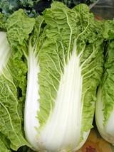 200 Seeds Michihili Chinese Cabbage Pak Choi Bok Heirloom Greens Healthy Non-GMO - $1.36
