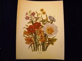 Vintage Floral Print Loudon Florals 1783-1834 no 1089