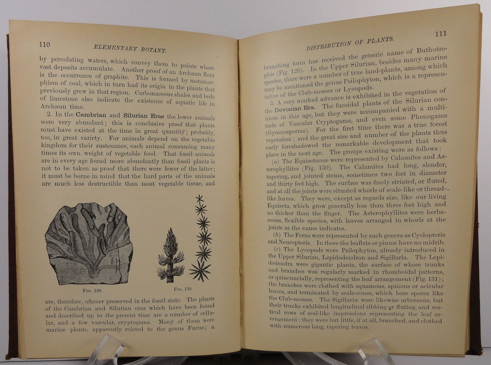 A Text Book of Elementary Botany by W. A. Kellerman 1900