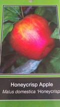 Honeycrisp Apple 4-6 Ft Tree Plant Sweet Juicy Apples Fruit Trees Plants - $96.95