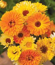 Calandula Double Mixed Flower Seeds - $3.99