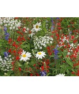 SHIP FROM US 5,000 Patriot Red White & Blue Wildflower Seed Mix, ZG09 - $19.16