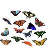 Butterfly Explosion 2 Art Decals - $25.00