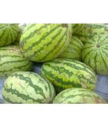 20 seeds - Cal Sweet Supreme Watermelon Red Citrullus Lanatus #SFB15 - $17.99