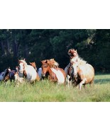 Chincoteague Ponies Photo - Pick One Image - Various Sizes - $7.50+