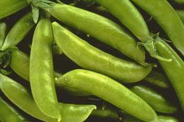 SHIP From US, 200 Seeds 'Sugar Lace II' Garden Pea, DIY Healthy Vegetabl... - $54.99