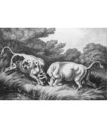AESOP FABLES Fighting Bulls Frog Watching - 1811 Original Etching Print - $21.60