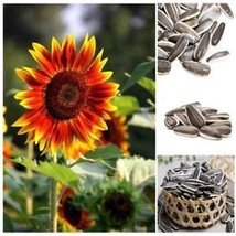 40 Pcs Mixed Sunflower Seed Seeds Vegetables Fruit Flower Home Planting ... - $2.29
