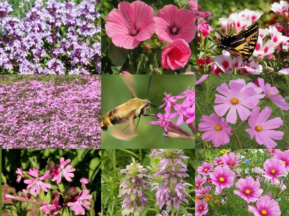 Primary image for SHIP FROM US 140,000 Pink Power Wildflower Mix Seeds, ZG09