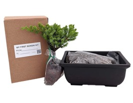 My First Bonsai Tree Kit plus Live Japanese Juniper Tree - $40.58