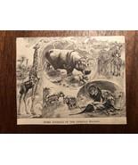 Vintage Engraving Print of AFRICAN ANIMALS Giraffe Zebra Lion Unframed 3... - $7.25
