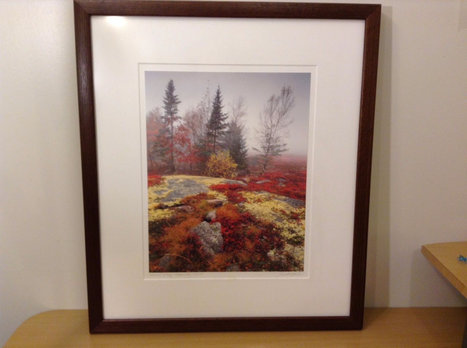 Mosses and Fog  Sedgwick, Maine Photograph Signed by Photographer Custom Frame