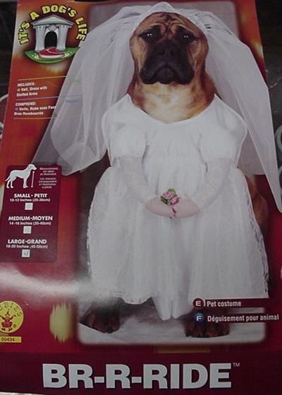 BRIDE PET COSTUME SIZE LARGE Bonanza