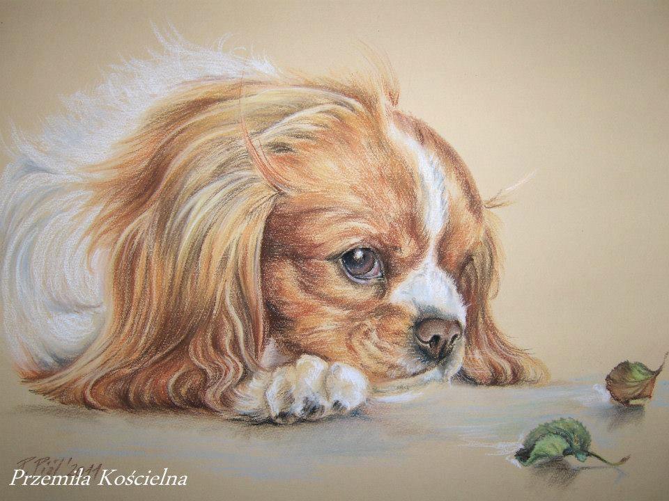Custom dog portrait, Pastel drawing on request, Pet portrait from photos, Art