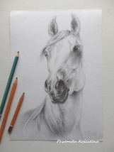 Custom horse portrait, Horse head, Graphite pencil drawing on request, E... - $99.00