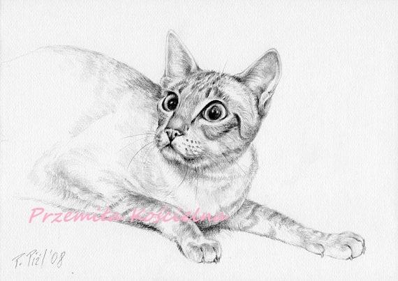 Custom CAT Pencil Drawing, Cat potrait form photos, Graphite pencil drawing, Art