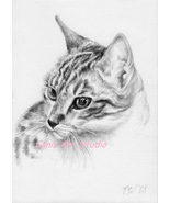 Custom CAT Pencil Drawing, Cat potrait form photos, Graphite pencil draw... - $99.00