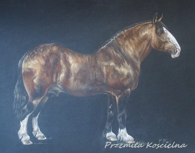 Custom horse portrait, Pastel drawing, Equestrian Art from photos, Horse body