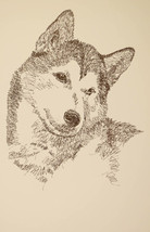 Siberian Husky Dog Art Portrait Print 64 Stephe... - $49.45