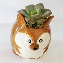 "Ceramic Animal Planter & Live Succulent 2"" Kangaroo Pot Echeveria Green Burgundy image 3"