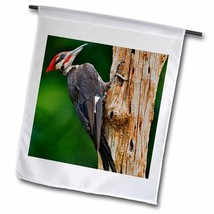 3dRose fl_90354_1 Pileated Woodpecker Bird, Louisville, Kentucky Us18 Aj... - $24.87