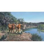 Lone Star Legacy by Ragan Gennusa Texas Longhor... - $39.59