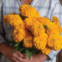 Coco Gold Marigold Seeds / Marigold Flower Seeds - $21.00