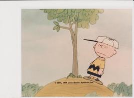 Peanuts  Charlie Brown Tree Comic Strip Vintage 11X14 Color TV Memorabil... - $12.95