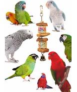 Foraging Coconut and Palm Leave Barrel Bird Toys - $14.50