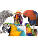 "Fill-A-Treat"" Bird Toy Pinatas - $10.50 - $15.50"