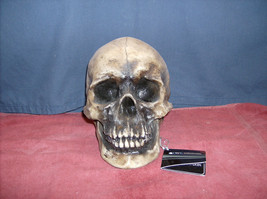 Very Large Skull   HH12217  De Mortvis    ABC - $14.95