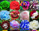 Seeds-bonsai-50-x-rare-multi-colors-rainbow-rose-seeds-garden-plant-20-kinds-of-01_thumb155_crop