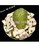 Fruit seeds 5 pcs Graviola Soursop Guanabana Annona Muricata Tropical Seed - $3.69