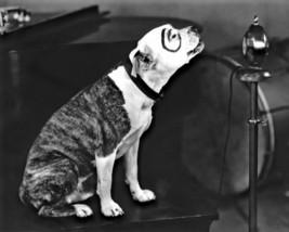 Little Rascals Pete Dog HS Vintage 8X10 BW Comedy TV Memorabilia Photo - $6.99