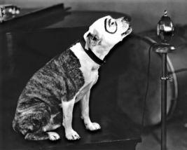 Little Rascals Pete Dog HS Vintage 11X14 BW Comedy TV Memorabilia Photo - $13.95