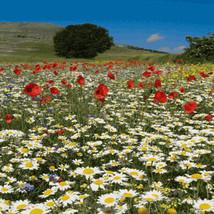 Southeast Wildflower Seed Bombs *Grow Flowers Anywhere!* - $3.00