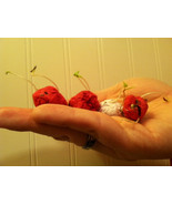 20 Midwest Native Wildflower Seed Bombs *Spring is Coming!* - $10.00