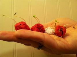 Midwest Native Wildflower Seed Bombs *Grow Flowers Everywhere!* - $3.00