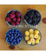 Four different varieties of raspberry seeds!Edible! Easy to grow! Home g... - $2.85