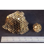 WASP NEST set of 2 PAPER WASPS HORNET HIVE Taxidermy Science or Art project - $12.19