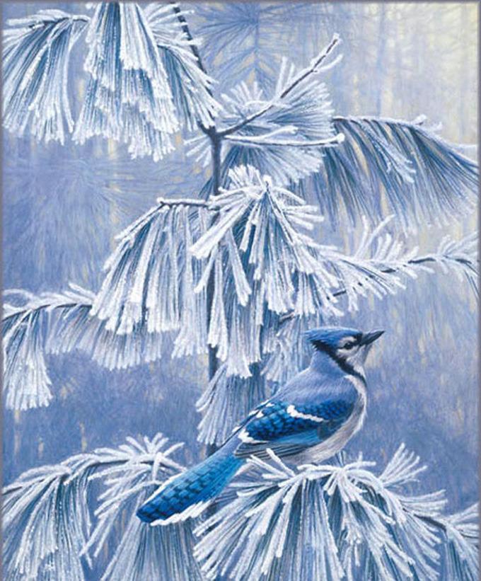 Frosty morning blue jay cross stitch pattern