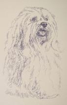 Havanese dog art Portrait Print #32 Kline adds dog name free. Drawn from words - $49.45