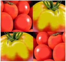 40 Seeds - THESSALONIKI Tomato Seeds - GREEK HEIRLOOM - $4.82